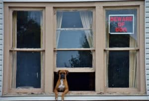 Should You Allow Pets in a Rental Property
